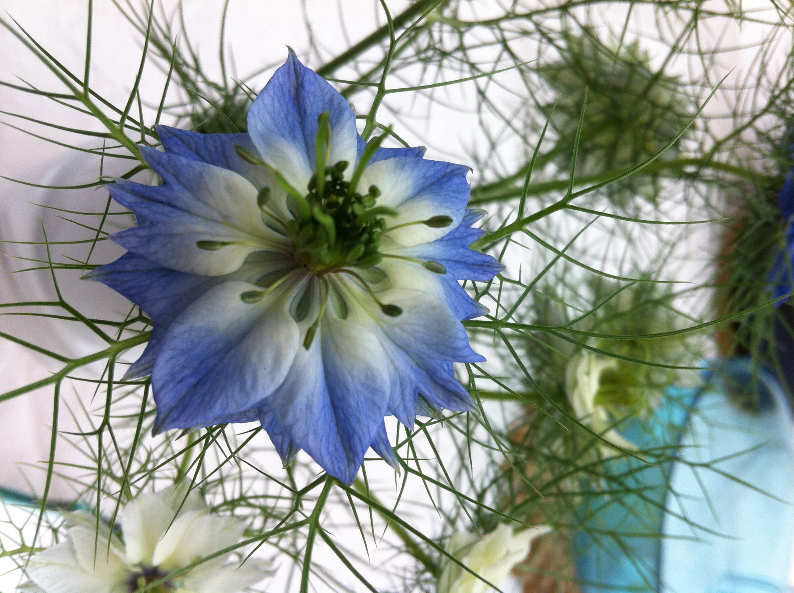 Plant-based passion